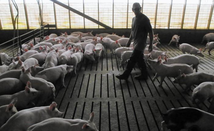 Ética para cerdos